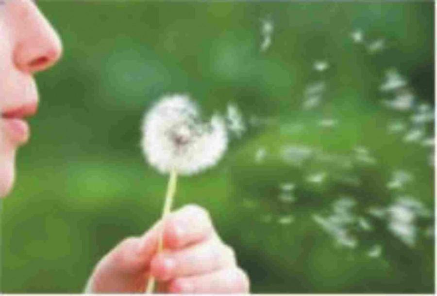 Allergien vorbeugen und behandeln